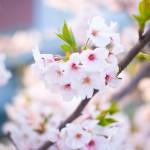 本日より春の入会キャンペーンスタート!